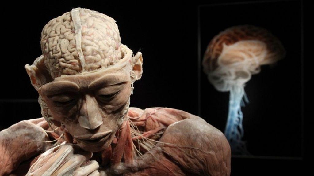 Hallan una zona del cerebro que no envejece