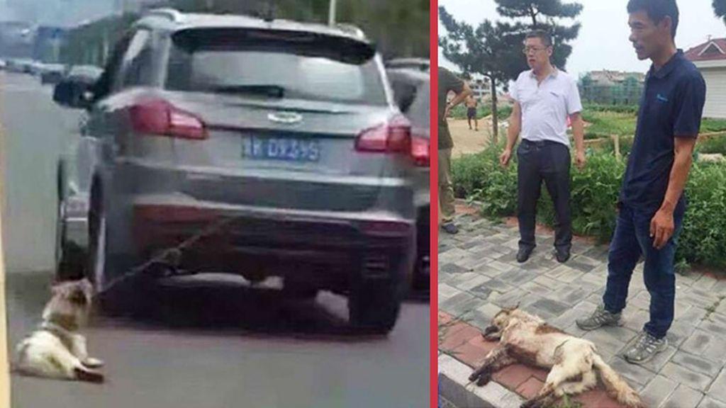 Decenas de chinos intentan linchar a un conductor por arrastrar a su perro por Weihai