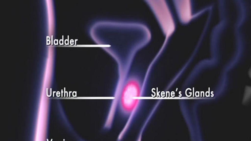 Explicación gráfica del órgano sexual femenino
