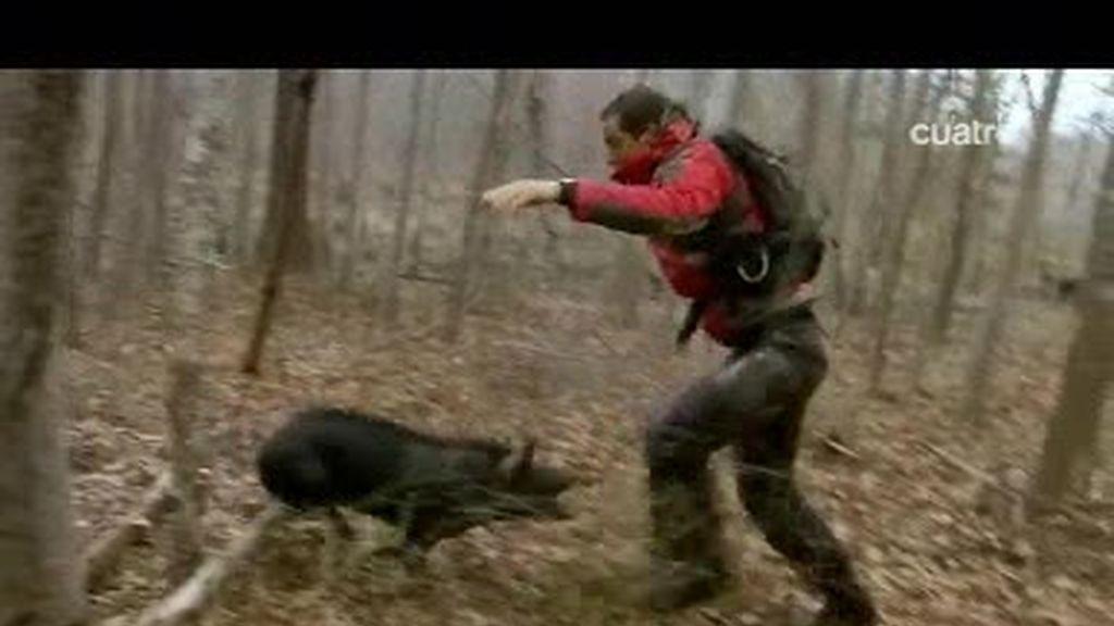 Alabama: El último superviviente apresa un peligroso jabalí