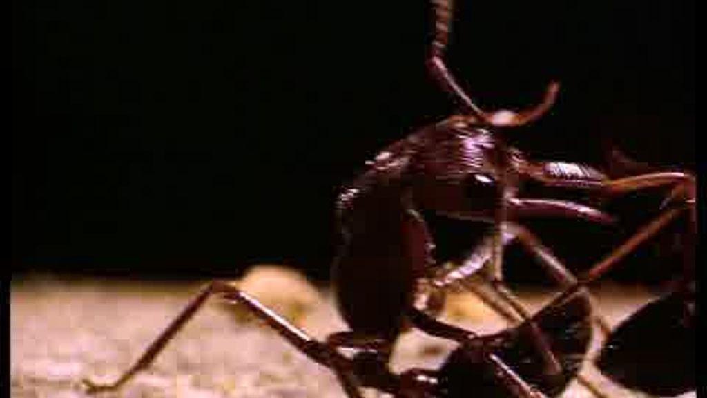 Promo El hormiguero: ¡Vuelve muy pronto!