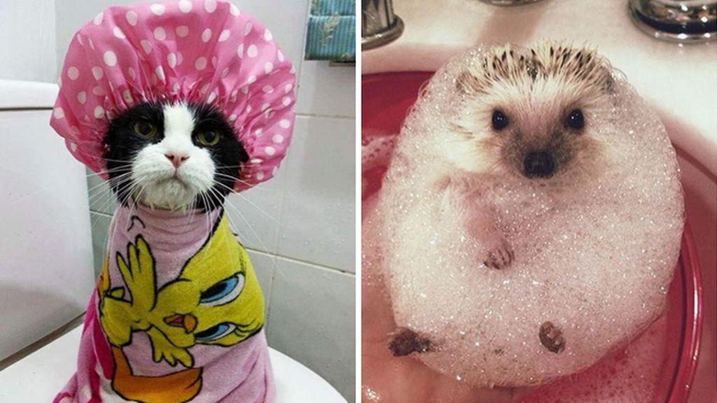 La felicidad de un baño