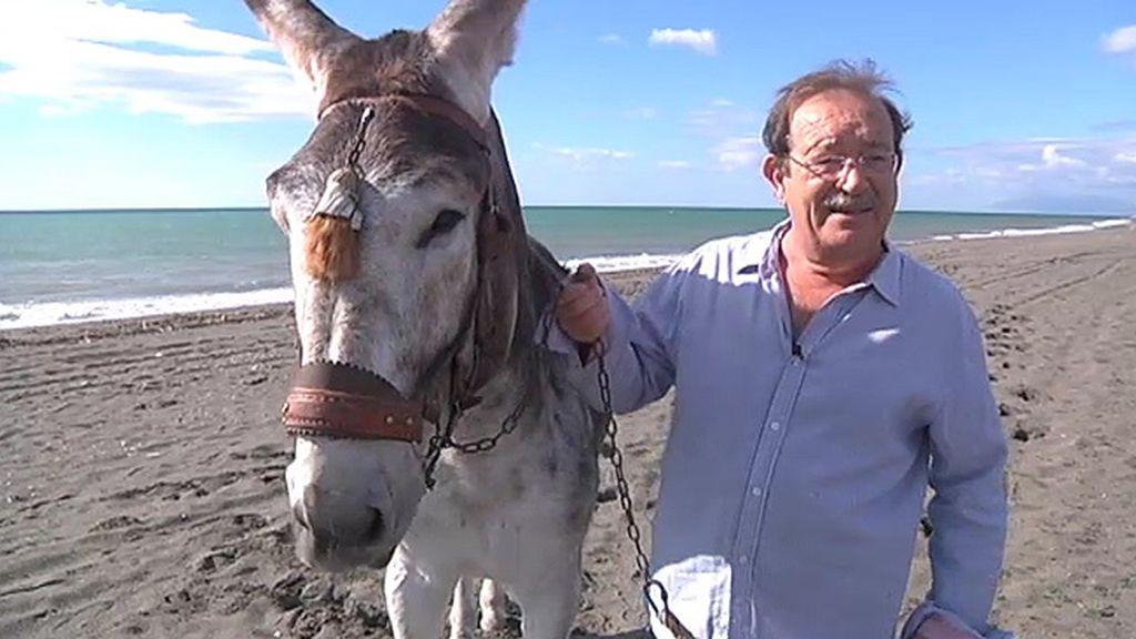 Jabalíes, ciervas, linces, burros, ocas y ponis... unos animales muy domésticos