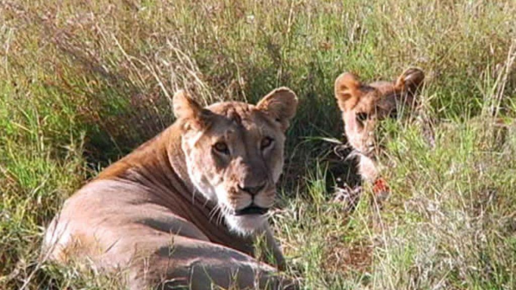 La fauna de Kenia es una de las más ricas de África