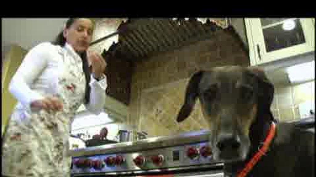 Promo El encantador de Perros: ¿problemas con tu perro?