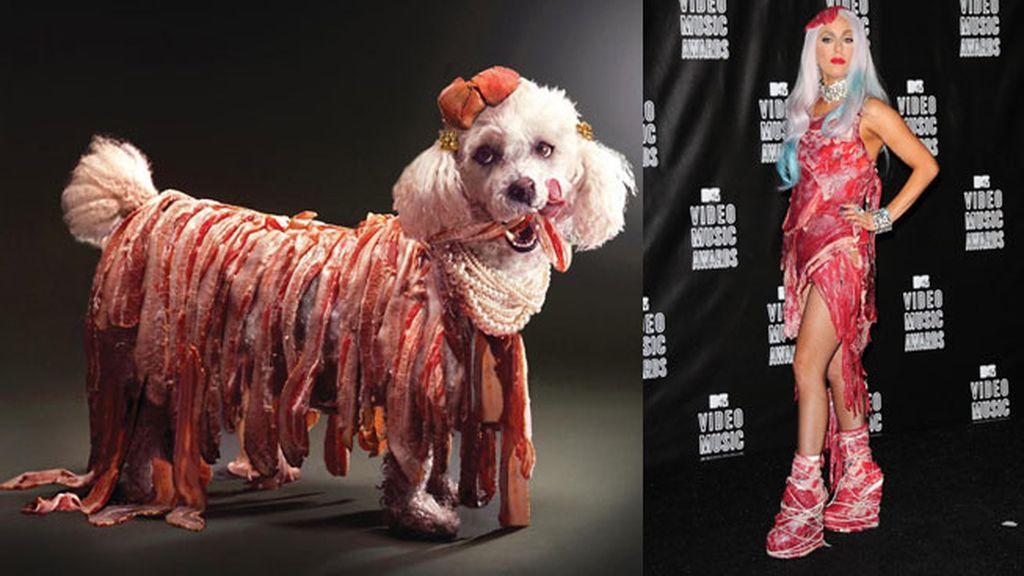 El caniche Max a lo 'Lady Gaga'