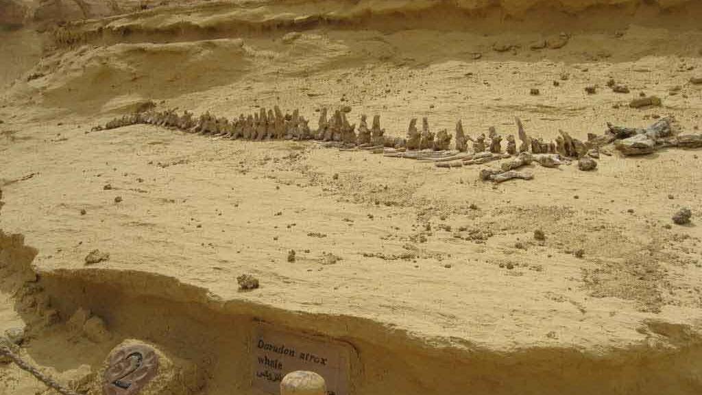 El valle de las ballenas... en Egipto