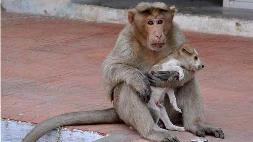 Un mono adopta a un perrito