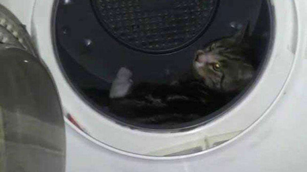 Gato maltratado en una secadora