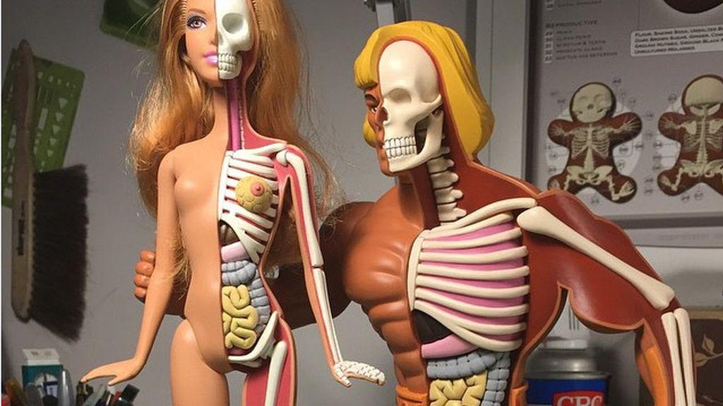 Así sería el interior de Barbie y He-Man si fuesen de carne y hueso
