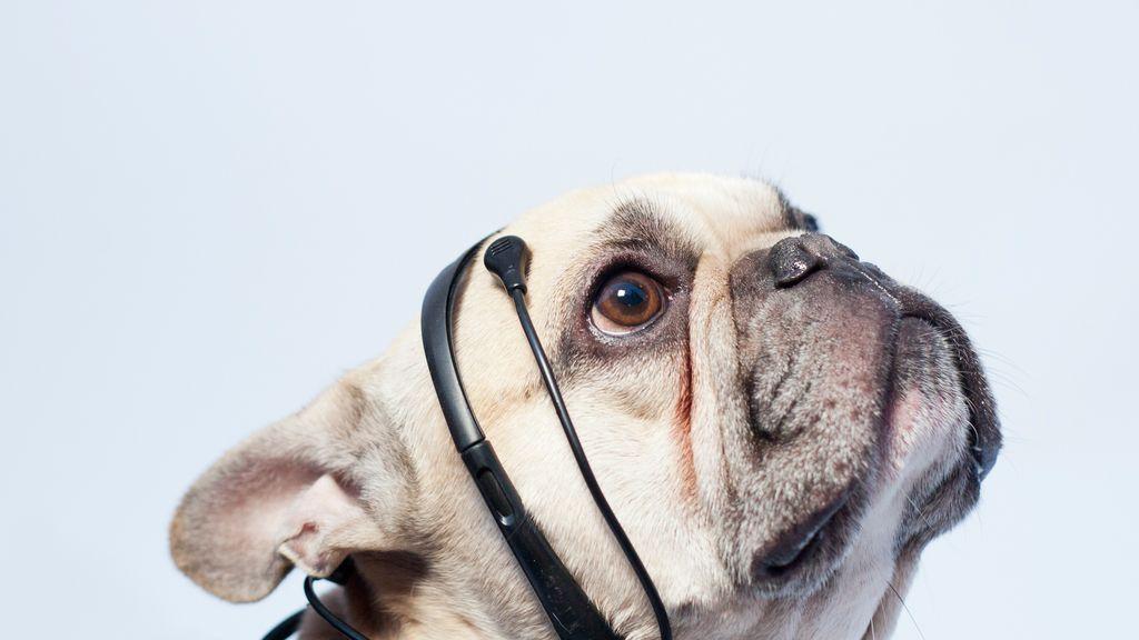 traductor de perro