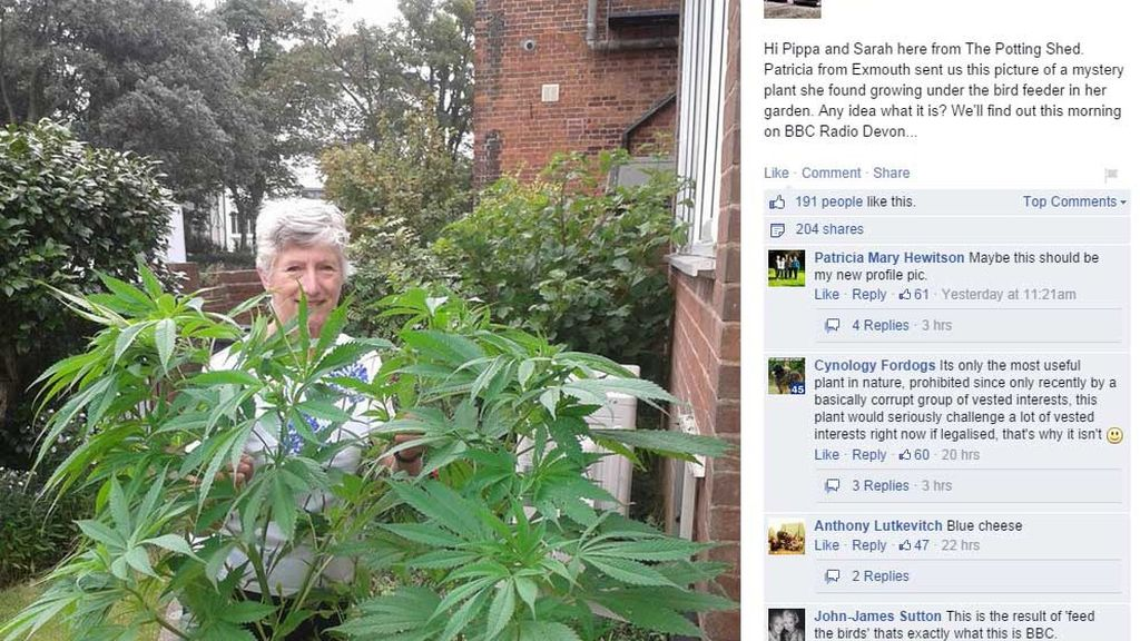 Británica se entera por Facebook de que la planta rara que creció en su jardín es marihuana