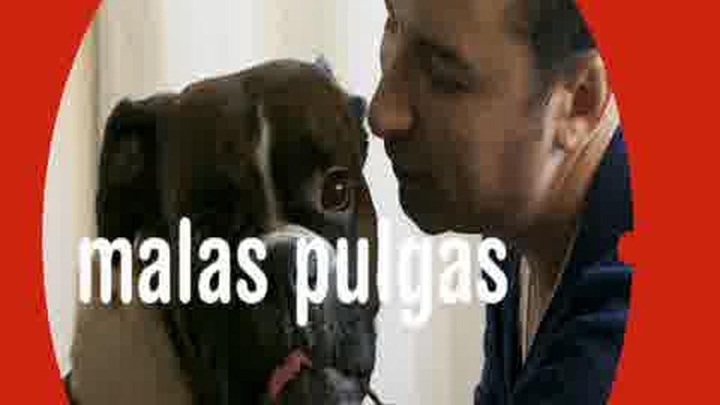 Promo Malas Pulgas: Tú eres el que manda