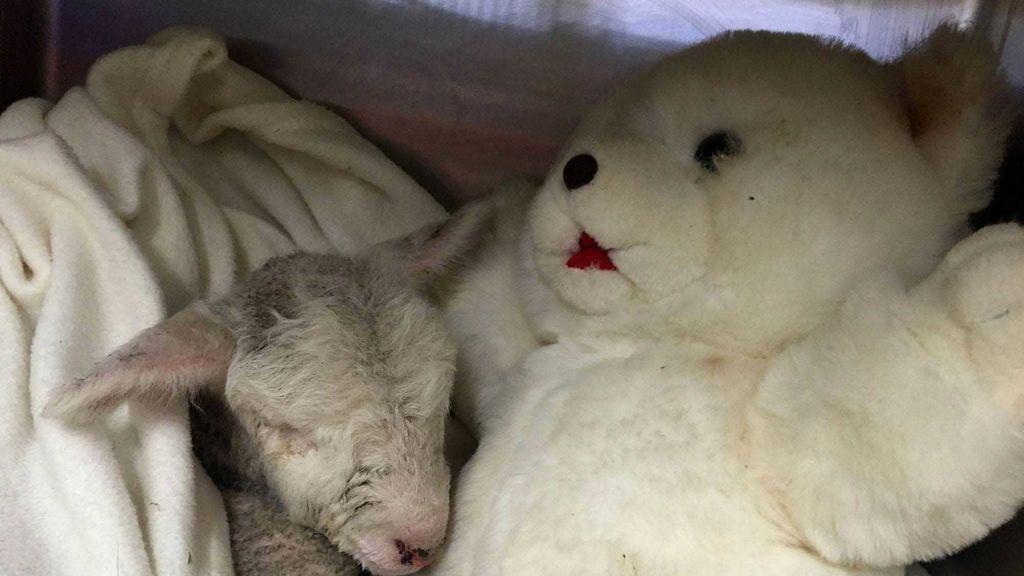 Separados de su madre al nacer, crecen al calor de un juguete
