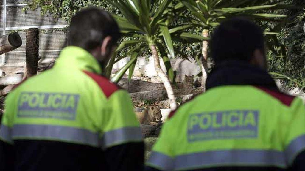 Un hombre herido por leones en el zoo de Barcelona, en estado crítico