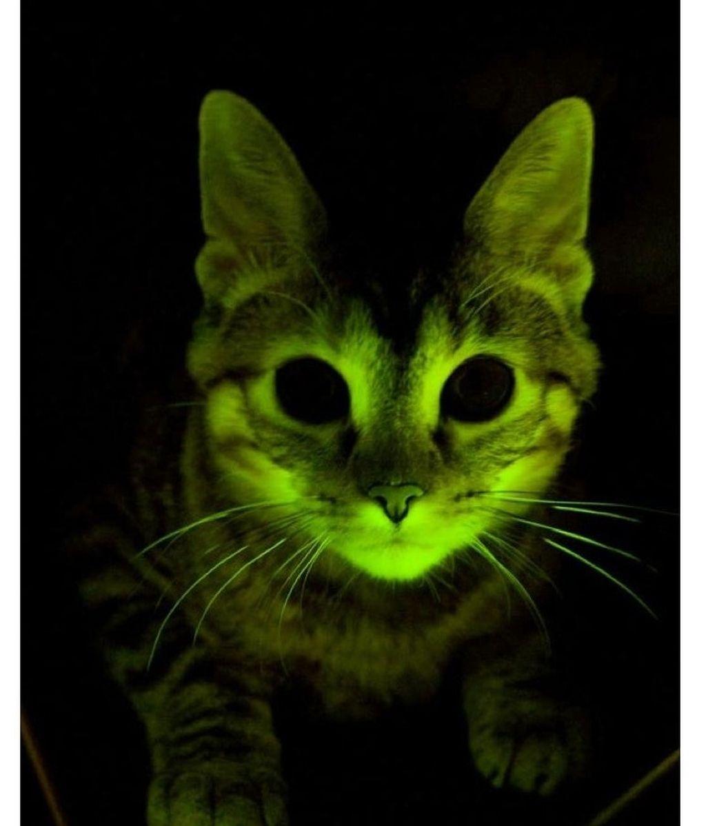 Gatos fluorescentes para combatir el VIH