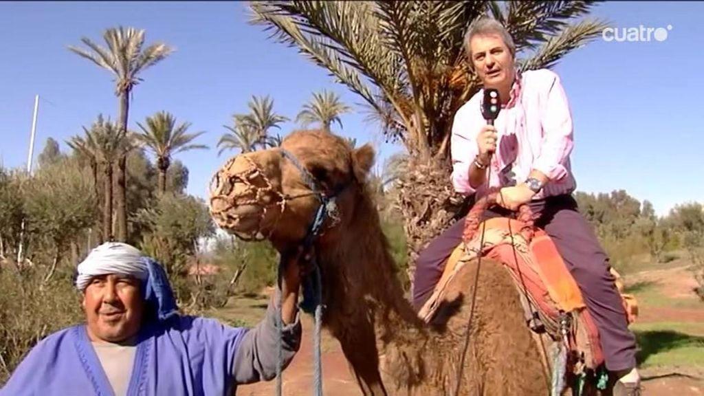 El presentador conecta desde Marruecos a lomos de un camello