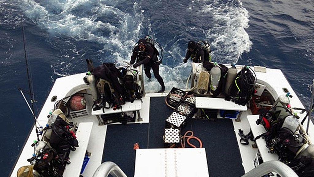 Buceando con el tiburón de puntas blancas: ¡Desafío conseguido!