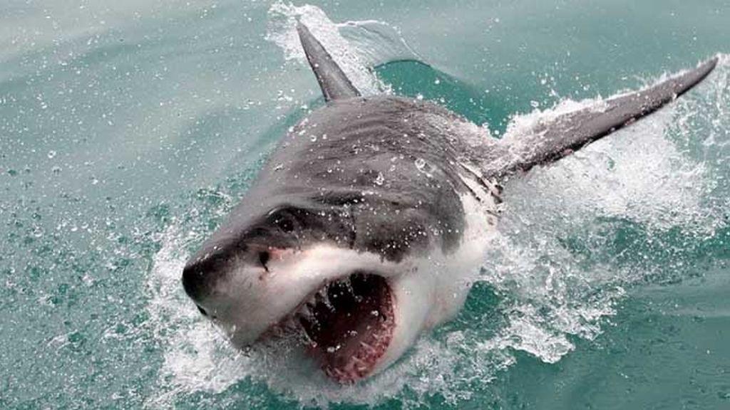 ¡Tiburón a la vista! Así es estar cara a cara con un escualo