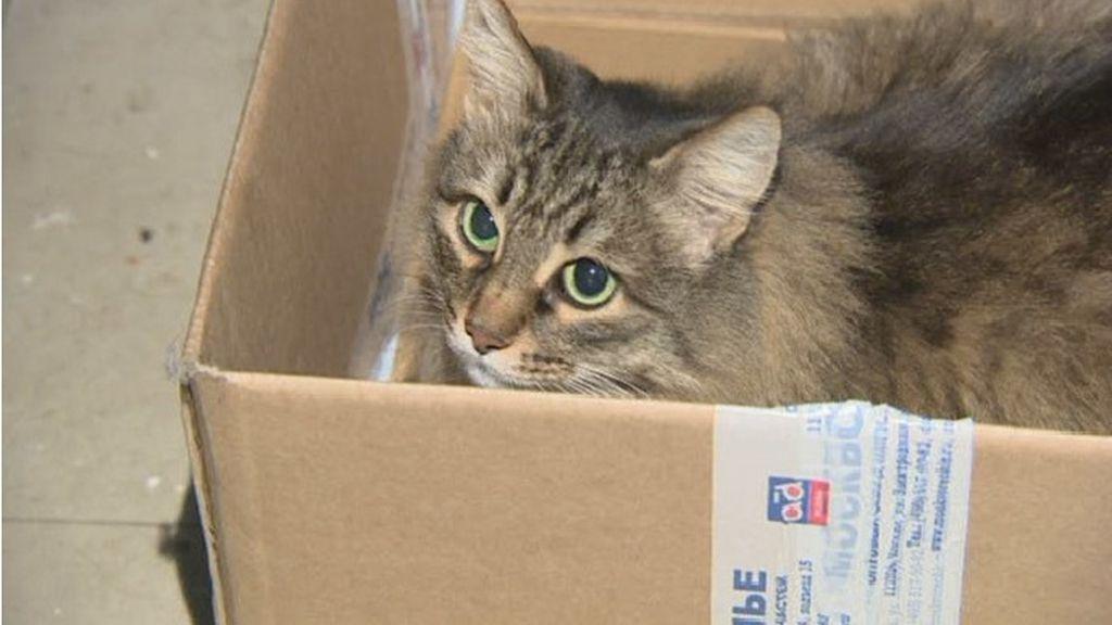 8-Un gato evita que un bebé muera congelado en Rusia