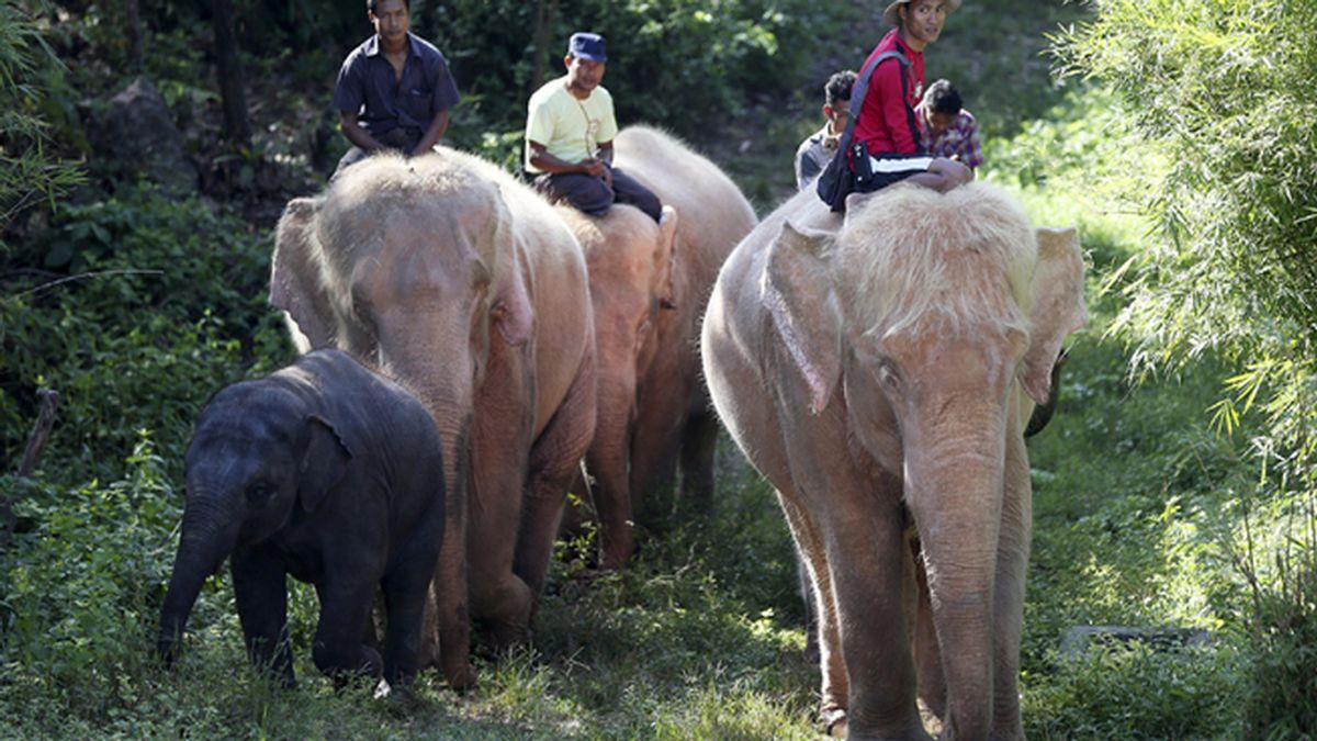 Elefantes blancos en Asia