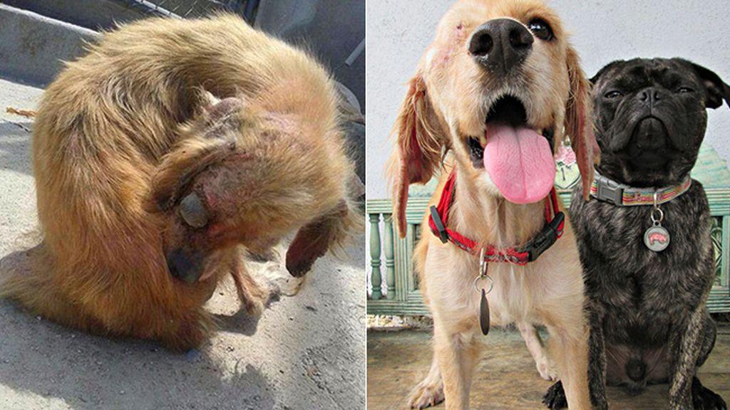 Perros antes y después de ser rescatados