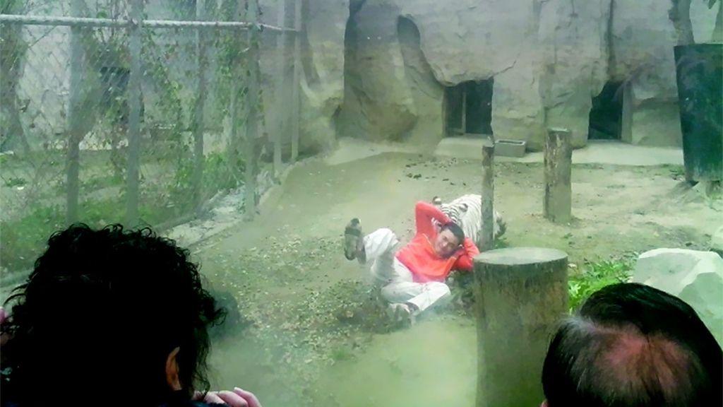 suicida,zoológico chino,tigres,trabajador deprimido,Chengdu