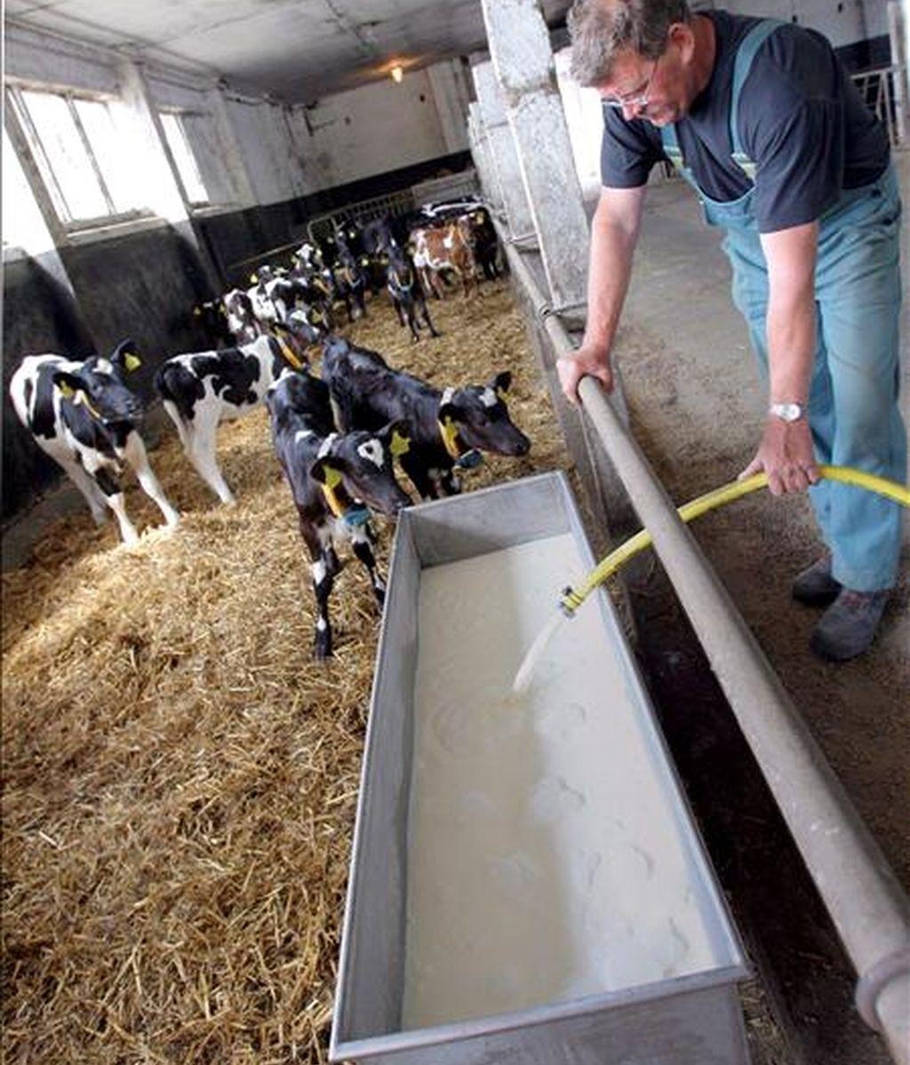 El Gobierno de Alemania analiza si existen responsabilidades penales en la contaminación con dioxina de piensos para animales, incidente que ha obligado a cerrar al menos un millar de granjas avícolas y porcinas en todo el país. EFE/Archivo