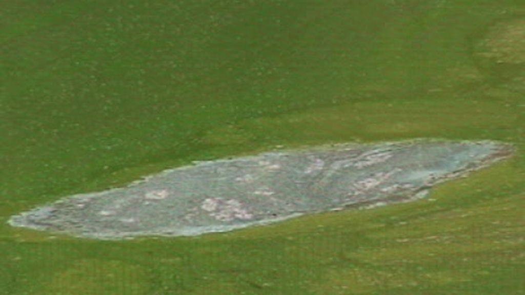 Embalse de agua verde