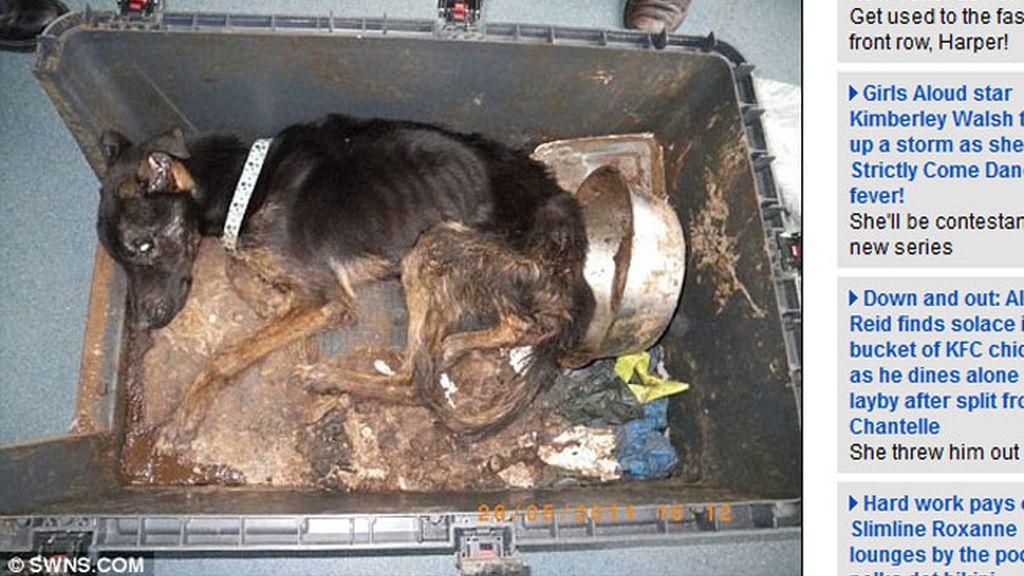 Cruel muerte de un perro, encerrado durante siete meses sin comida ni agua