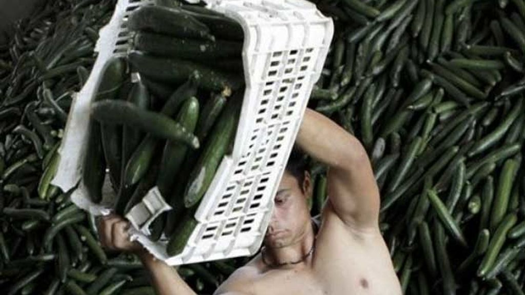 Los pepinos españoles han vuelto al mercado.