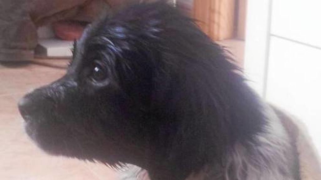 Adoptado el perro abandonado por estar en contacto con Excalibur