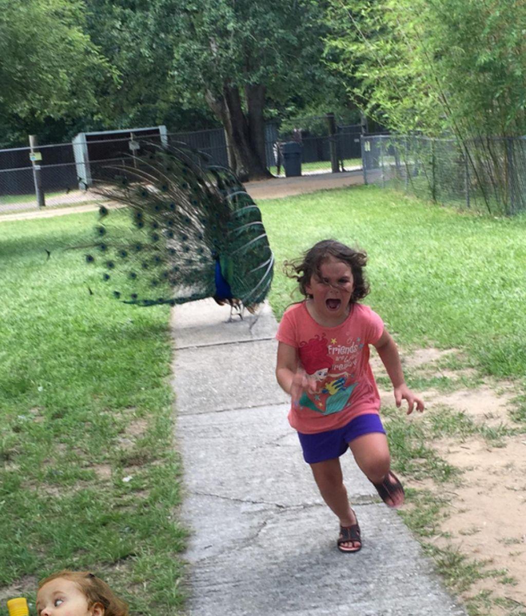 La Red parodia la huida desesperada de una niña ante un pavo real