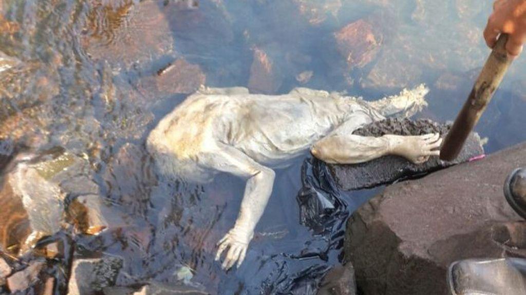 Revive el mito del 'Chupacabras' tras la aparición de una extraña criatura en Paraguay