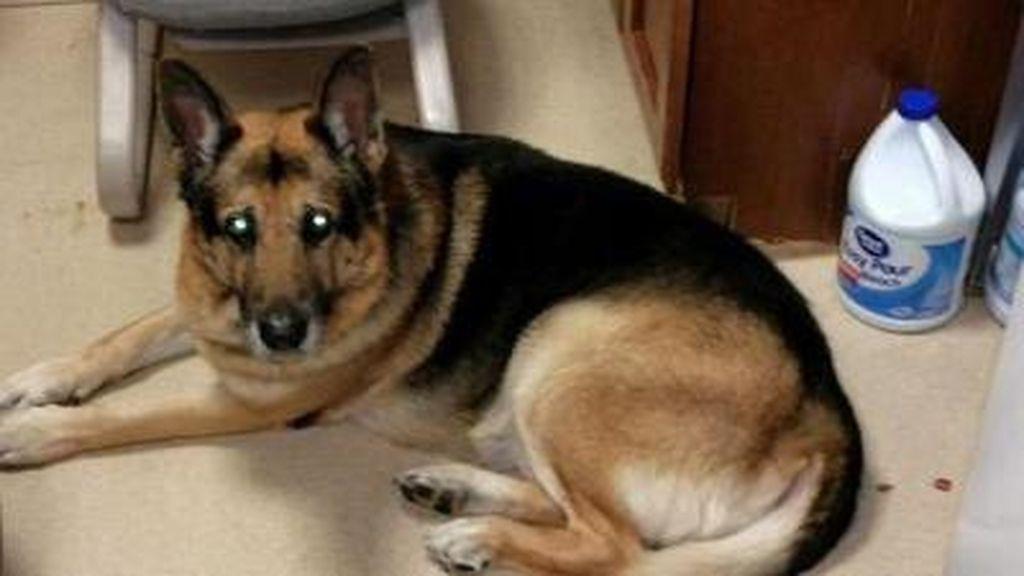Una mujer fallecida pidió en su testamento que la enterran con su perro, que sigue vivo