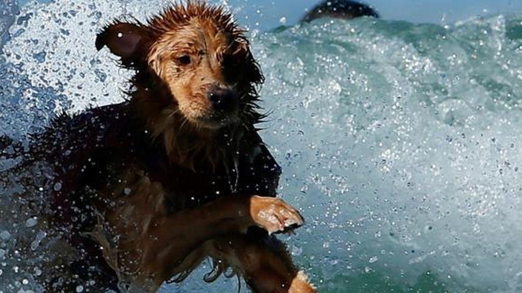 perro muere ahogado,salva niño,niño ahogado,perro ahogado en Italia, playa de Italia
