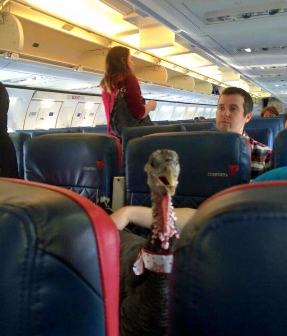Pavo en un avión