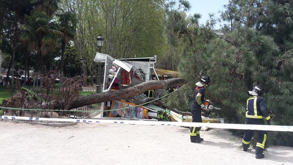 Cae un árbol en la Plaza de España de Madrid