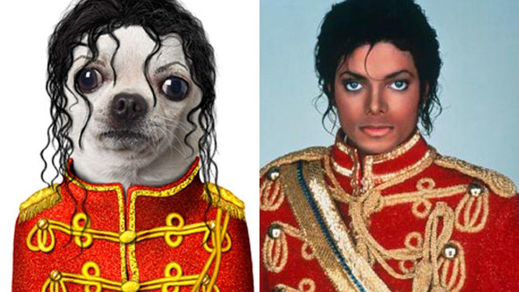 Pet Celebrities