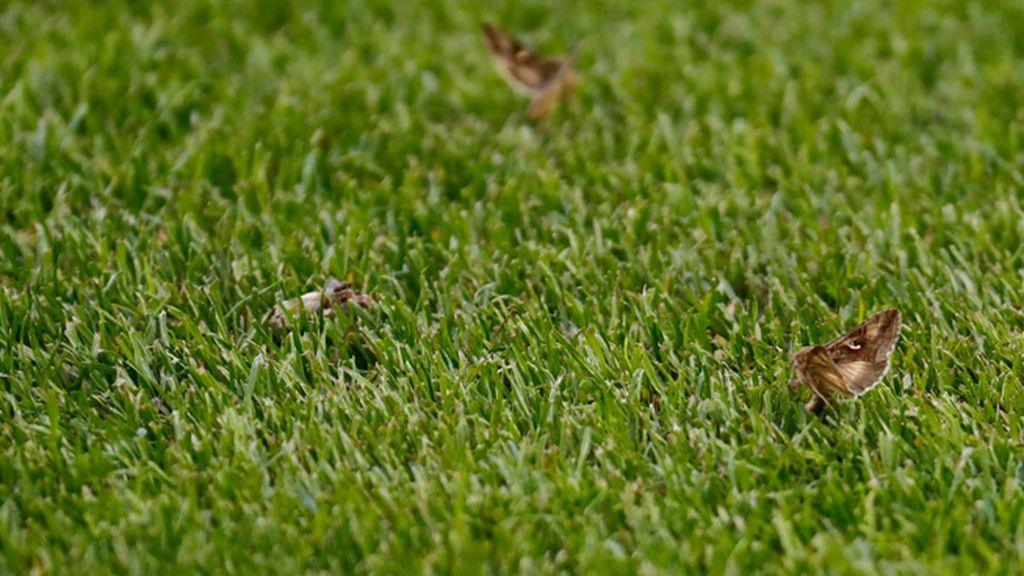 Collina y Deschamps, 'atacados' por los insectos