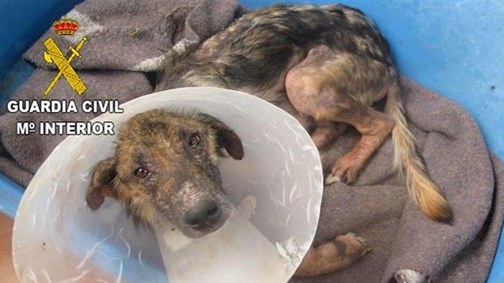 Perro encontrado en Castellón en avanzado estado de desnutrición