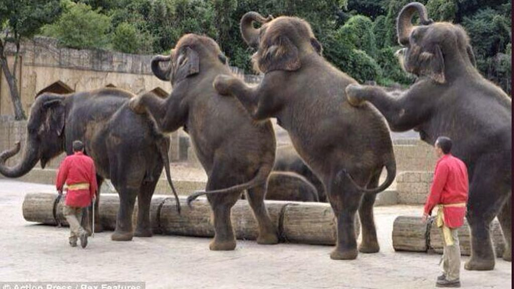 """""""Llegan las primeras reacciones internacionales desde Botswana: ¡Conga!"""""""
