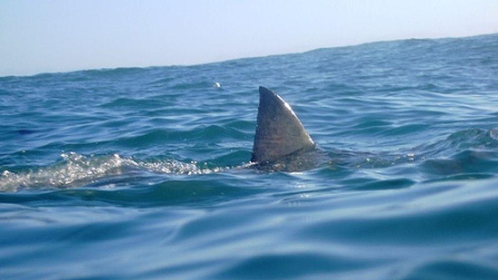 El tiburón mordió el brazo del hombre que practicaba surf en horario nocturno. Tiró de su extremidad, mientras trataba de arrastrarlo bajo la tabla.