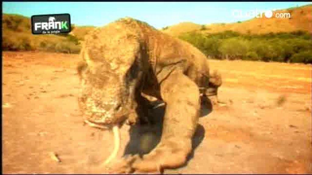 AVANCE: El Dragón de Komodo