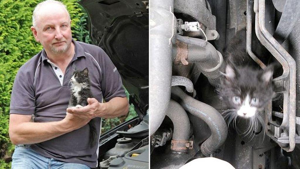 Encuentra un gato dentro del motor de su coche