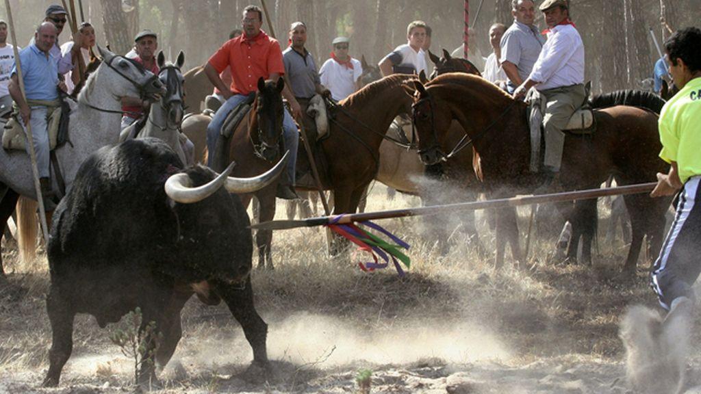 División y polémica en Twitter tras la prohibición de matar al Toro de la Vega