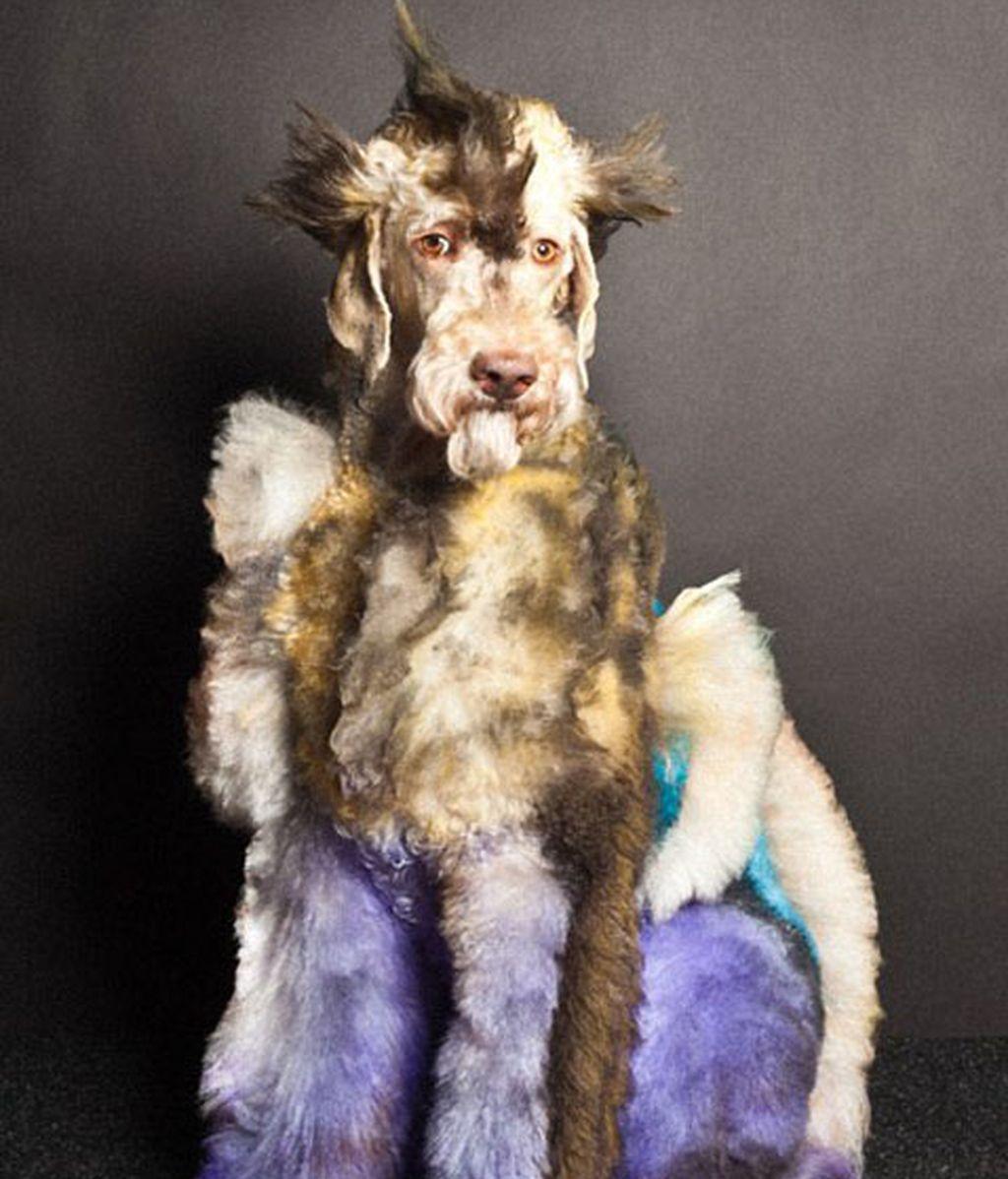 Perros con transformaciones extremas