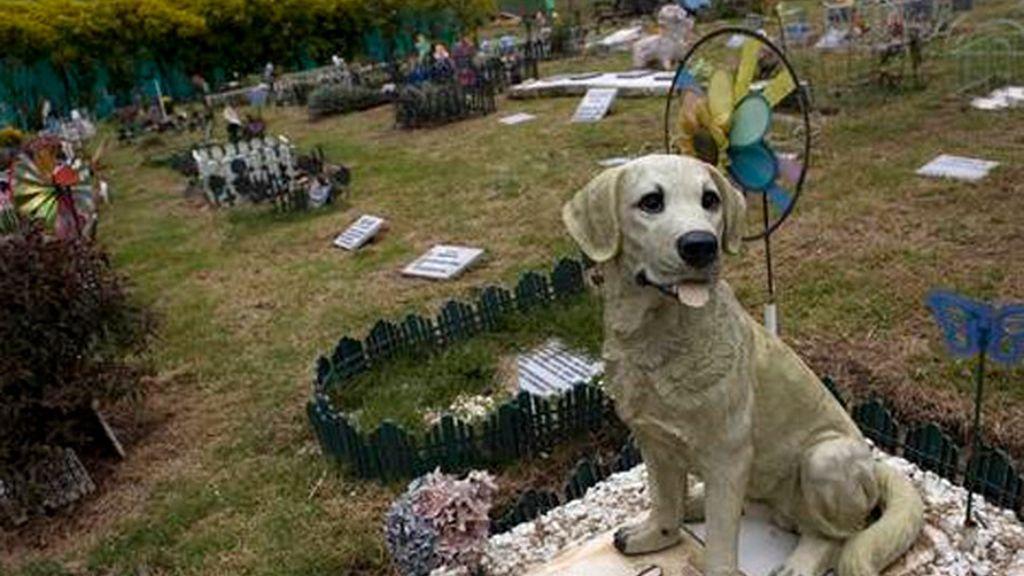 Cementerios para difuntos de cuatro patas