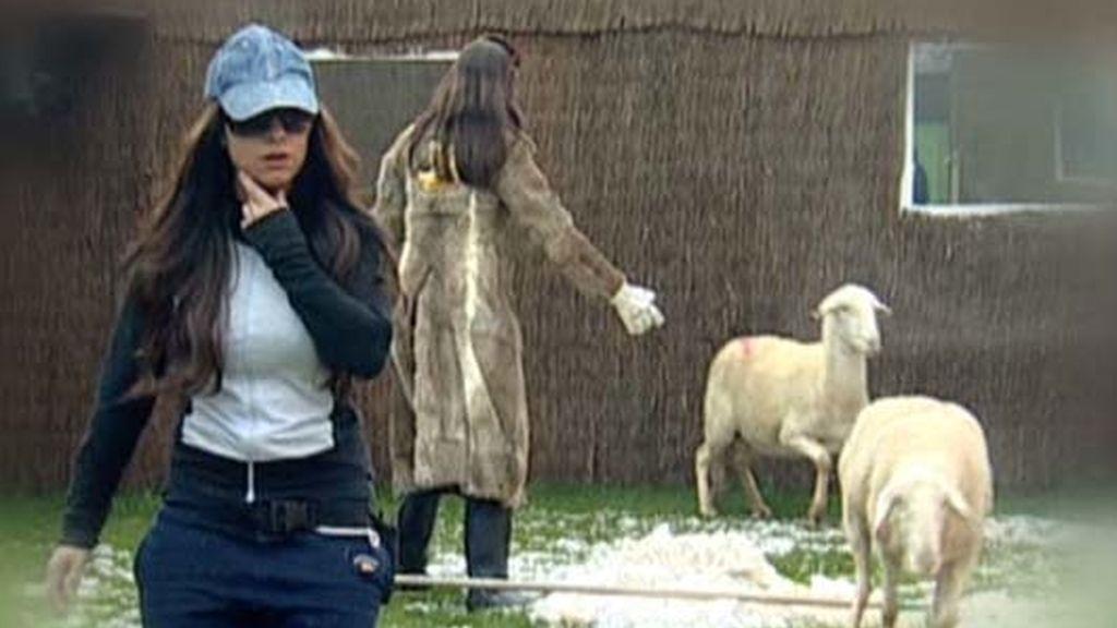 Eva, Ana, Gema y sus ovejitas