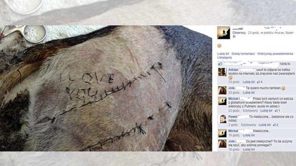 """Un estudiante de veterinario escribe al coser a un perro """"I love you"""""""